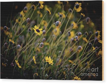 Wood Print featuring the photograph Morning Flowers by Kelly Wade