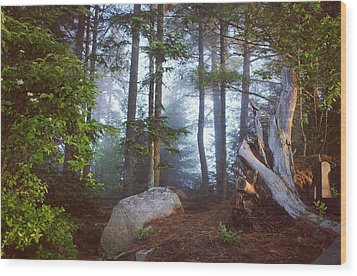 Morning Forest Light Wood Print