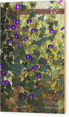 Morning Glories Wood Print by Margie Hurwich
