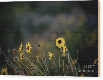 Wood Print featuring the photograph Morning Light by Kelly Wade
