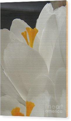 Morning Light Wood Print by Kristine Nora