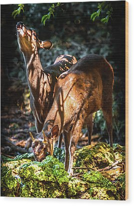 Wood Print featuring the photograph Morning Light Of Dawn by Karen Wiles