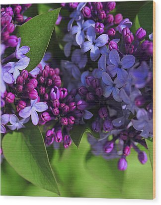 Morning Lilacs Wood Print by The Forests Edge Photography - Diane Sandoval