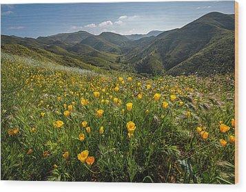 Morning Poppy Hillside Wood Print
