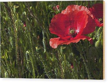 Morning Poppy Wood Print by Svetlana Sewell