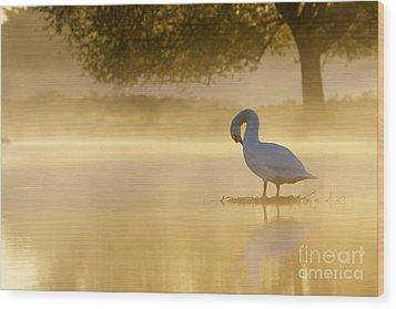 Morning Preen Wood Print