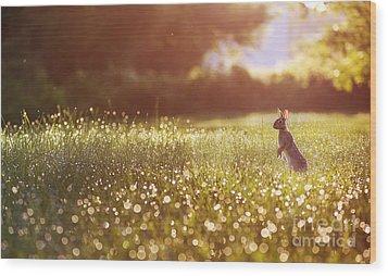 Morning Rabbit Wood Print