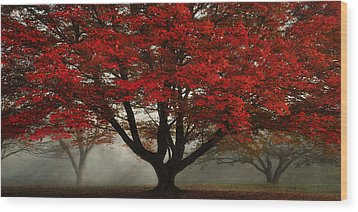 Wood Print featuring the photograph Morning Rays In The Forest by Ken Smith