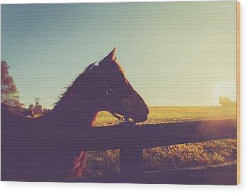 Wood Print featuring the photograph Morning  by Shane Holsclaw