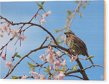 Morning Song Sparrow Wood Print by Rosanne Jordan