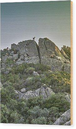 Morning Sun Lit Rocky Hill Greece Wood Print