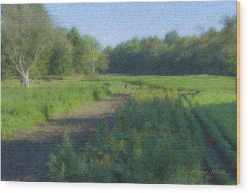 Morning Walk At Langwater Farm Wood Print