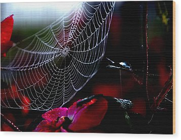 Morning Web Wood Print