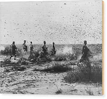 Morocco: Locusts, 1954 Wood Print by Granger