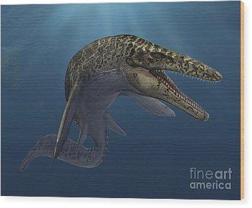 Mosasaurus Hoffmanni Swimming Wood Print by Sergey Krasovskiy