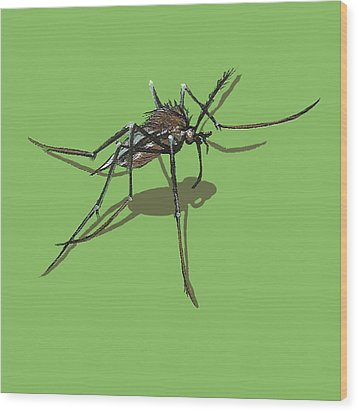 Wood Print featuring the painting Mosquito by Jude Labuszewski