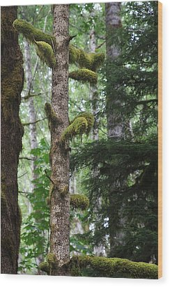 Moss-draped Trees On Tiger Mountain Wt Usa Wood Print by Christine Till