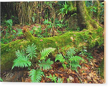 Moss On Fallen Tree And Ferns Wood Print by Thomas R Fletcher