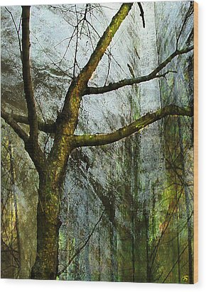 Moss On Tree Wood Print by Ken Walker