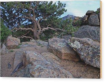 Moss Rocks And A Tree Wood Print by James Steele