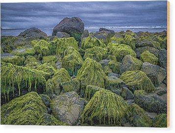 Moss Rocks Wood Print