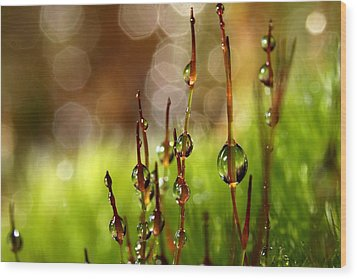 Moss Sparkles Wood Print