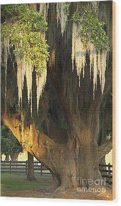 Moss Tree Wood Print