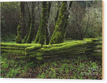 Mossy Fence 3 Wood Print by Bob Christopher