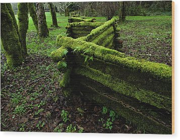 Mossy Fence 5 Wood Print by Bob Christopher