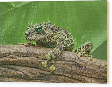 Wood Print featuring the photograph Mossy Frog by Nikolyn McDonald