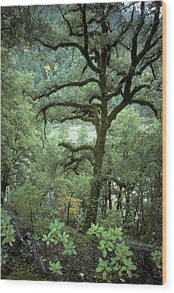 Mossy Tree On The River Wood Print by Charlie Osborn