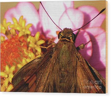 Moth On Pink And Yellow Flowers Wood Print