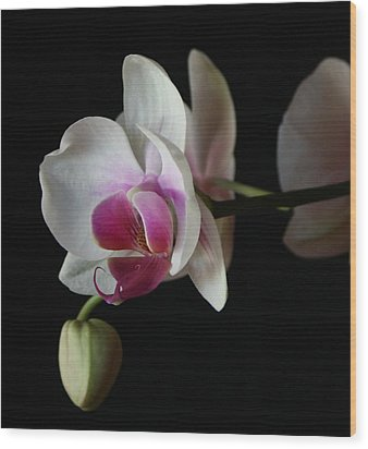 Moth Orchid 1 Wood Print by Marna Edwards Flavell