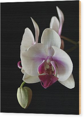 Moth Orchid 2 Wood Print by Marna Edwards Flavell