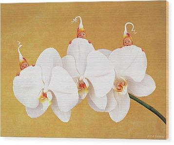 Moth Orchid Wood Print by Anne Geddes