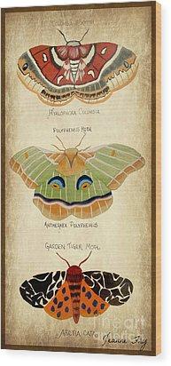 Moth Study Wood Print