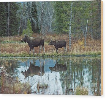 Mother And Baby Moose Reflection Wood Print