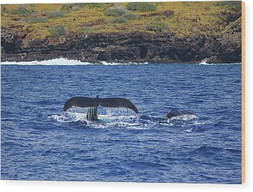 Mother And Calf Whaletails Wood Print