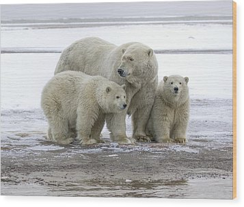 Mother And Cubs In The Arctic Wood Print