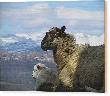 Mother And Lamb Wood Print by RKAB Works