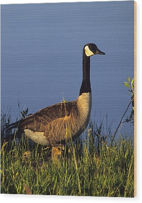 Mother Goose Wood Print by Bruce Gilbert