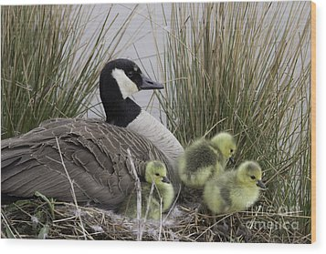 Mother Goose Wood Print by Jeannette Hunt