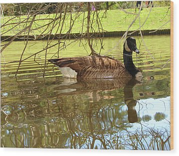 Wood Print featuring the photograph Mother Goose by Laura Brightwood