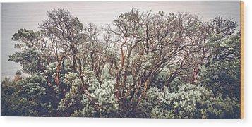 Wood Print featuring the photograph Mother Manzanita by Alexander Kunz