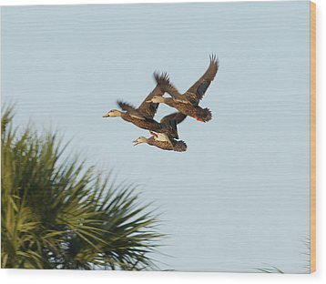 Wood Print featuring the photograph Mottled Ducks Take Flight by Lynda Dawson-Youngclaus