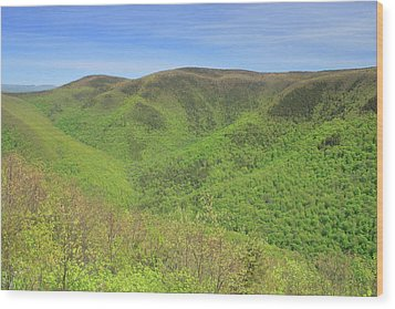 Mount Greylock Stony Ledge Spring Leafout Wood Print by John Burk