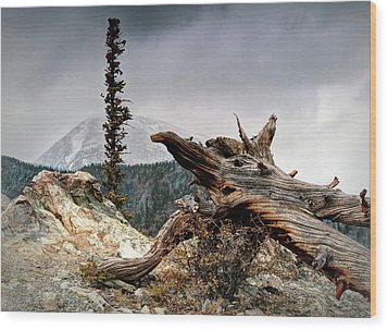 Wood Print featuring the photograph Mount Royal by Jim Hill