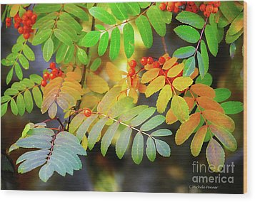 Mountain Ash Fall Color Wood Print by Michele Penner