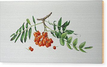 Mountain Ash With Berries  Wood Print by Margit Sampogna