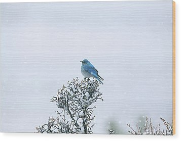 Mountain Bluebird In Snow Wood Print by Pat Gaines